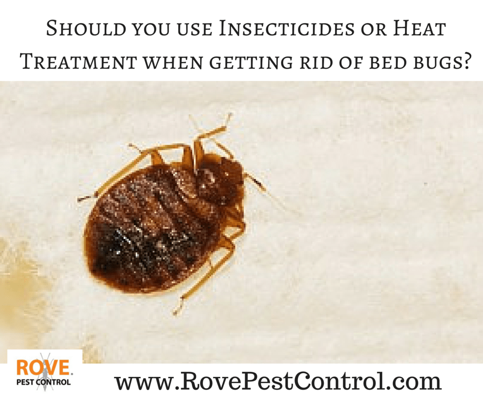 Should You Use Insecticides Or Heat Treatment When Getting Rid Of Bed Bugs Rove Pest Control
