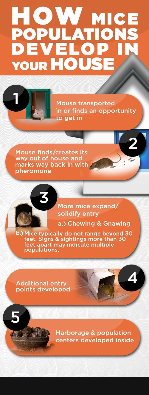 How Mice Populations Develop in your House