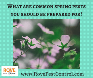 spring pests, spring pest control, common spring pests,