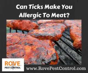 allergies, allergy, tick allergy, allergic to meat, tick bites, tick allergies, allergies caused from ticks
