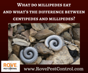 What do millipedes eat and what's the difference between centipedes and millipedes