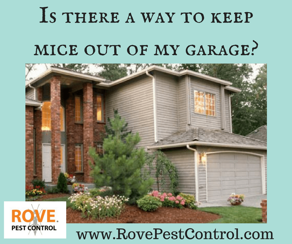 Is There A Way To Keep Mice Out Of My Garage Rove Pest