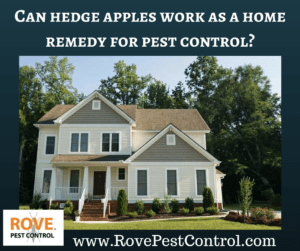 home remedies for pest control, natural pest control, do hedge apples work for pest control, do it yourself pest control, pest control tips,