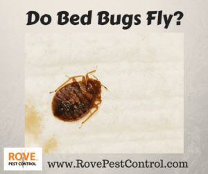 can bed bugs fly, do bed bugs fly, flying bed bugs, do bed bugs have wings, bed bugs, pest control, bed bug removal,
