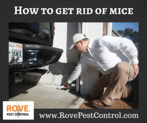 How to get rid of mice, getting rid of mice, how to get rid of mice in your home, how to kill mice, how to kill mice in your home, pest control, pest control tips, rodent removal, how to get rid of rodents