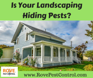 Is your landscaping hiding pests, pests, pest, landscaping, pest control, pest control tips