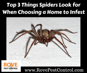 Top 3 Things Spiders Look for When Choosing a Home to Infest, spiders, how to get rid of spiders, spider removal, how spiders pick homes to infest, how spiders choose homes to live in, why do i have spiders in my home, why are there spiders in my home, why are there spiders in my bathroom, spider, spider facts, spiders,