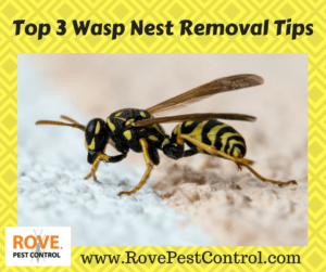 wasp, wasps, wasp removal, wasp nest, wasp nest removal, how to get rid of wasps, getting rid of wasps, how to get rid of a wasp nest, wasp nest removal, removing wasp nests,