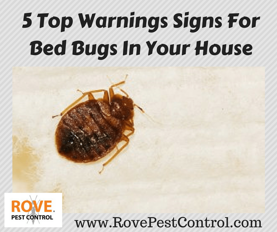 Tremendous 5 Top Warnings Signs For Bed Bugs In Your House Rove Pest Creativecarmelina Interior Chair Design Creativecarmelinacom