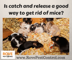 Pest Control Services Archives - Rove Pest Control