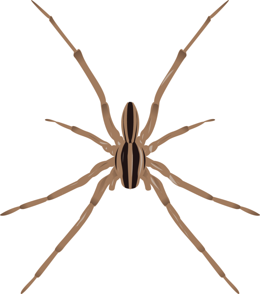 7 Poisonous Spiders In Minnesota Rove Pest Control